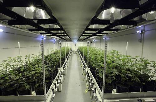 2016 The Medical Marijuana Market Is Forecast At 6 7