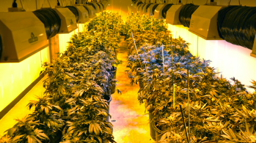 Get Your Mmj Farm Operating And Profitable With Real